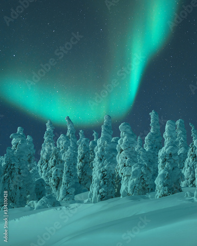 Aurora Borealis over snow covered trees - 334310428