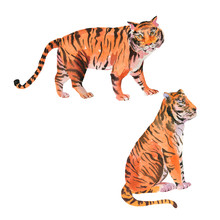 Set Of Watercolor Tiger On Whi...