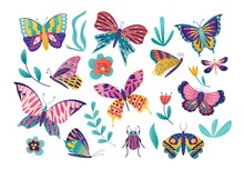 Butterfly Moth Insect Vector I...