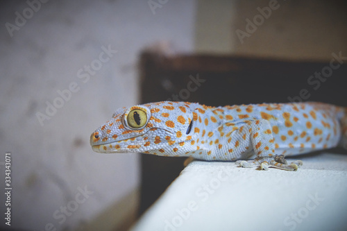Photo Gecko perched on the stilts at home