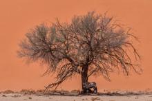 Dunes And Oryx In Nambib Naukluft National Park, Namibia