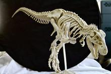 3D Printed Dinosaur Skeleton. ...