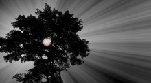 Abstract A Tree With The Sun Behind Spreading Light In The Sky, Black-toned Image. There Is A Space For Text.