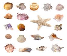 Collection Of Seashells Isolat...