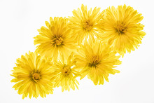 Bouquet Of Yellow Mums