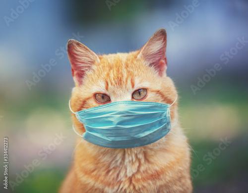 Portrait of a ginger cat Tableau sur Toile