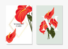 Anthurium Red Floral Card Minimal Design, Wedding Invitation, Bridal Ceremony Poster With Gold Elements. Big Macro Painted Tongue Flower,  Flamingo Flower Template. Vector