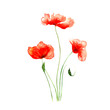 three red poppies with stems painted in watercolor