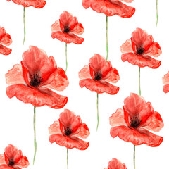 Fototapeta Maki big red summer poppies with stems watercolor painted pattern