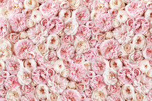 Delicate Blossoming Roses, Blo...