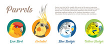 PARROTS Icon SET - 3 Species -...