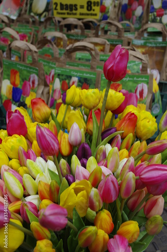 Fototapety, obrazy: vacanza in Olanda Amsterdam e parco dei tulipani Keukenhof