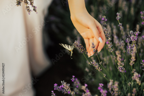 Hand of girl near lavender flowers. Butterfly flying over lavender flower. Lavender garden lit by sunlight. Lavender bushes with butterfly close up. Inspirational summer flowers background.