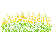 Flowering Field. Vector Bio Pr...