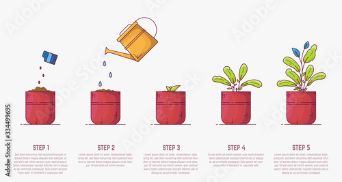 Photo Growing plant stages
