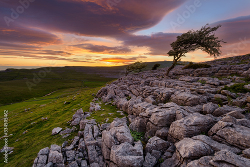 Fotografie, Tablou Windswept Lone Tree With Beautiful Sunset Reflecting Onto Rock Formations In The Yorkshire Dales Countryside