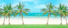 Row Of Green Leaves Coconut Palm Trees On Green Grass Lawn In Front Of Clean Brown Sand Beach, Turquoise Sea  And White Wave Under Vivid Blue Sky