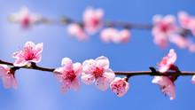 Un Ramo In Fiore A Primavera