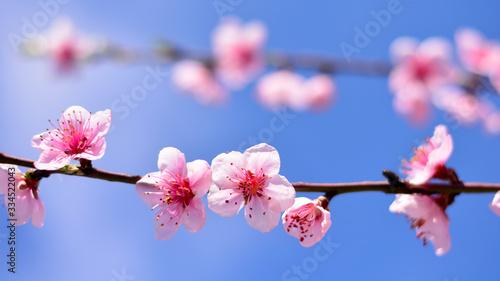 un ramo in fiore a primavera Obraz na płótnie