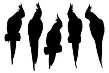Cockatiel Parrot Set Silhouett...