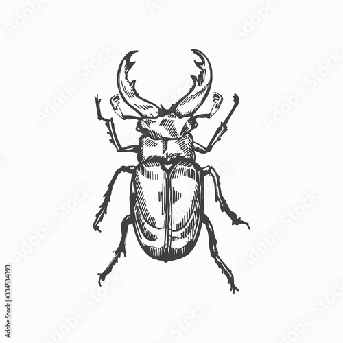 Fotomural Stag beetle hand drawn vector sketch