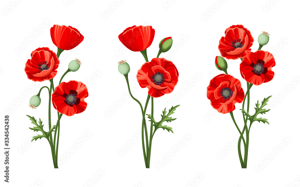Fototapeta Vector red poppies isolated on a white background.