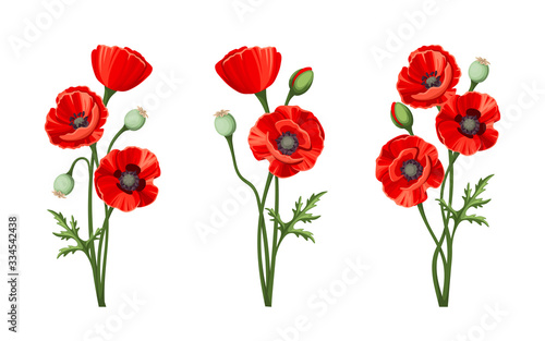 Vector red poppies isolated on a white background. - 334542438