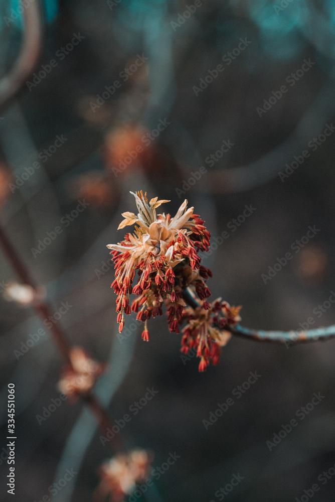 Wiosenny kwiat - obrazy, fototapety, plakaty