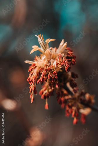 Obraz Wiosenny kwiat - fototapety do salonu