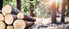 Log Trunks Pile, The Logging T...