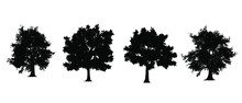 Set Of Tree Silhouette Isolate...