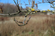 Tree Branch On Dry Grass And B...