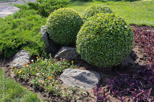 Photo Park with bushes and stones. Landscape design