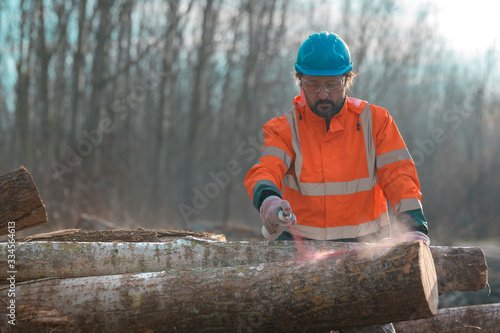 Forestry technician marking logs for firewood with red aerosol paint Wallpaper Mural