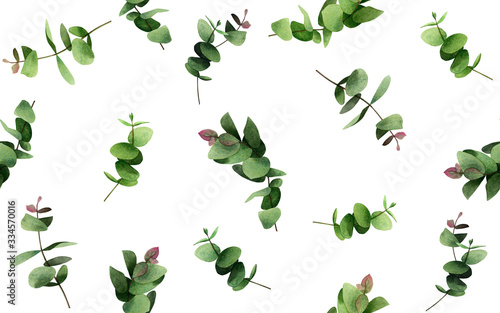 Watercolor painting  eucalyptus branches leaves on white Wallpaper Mural