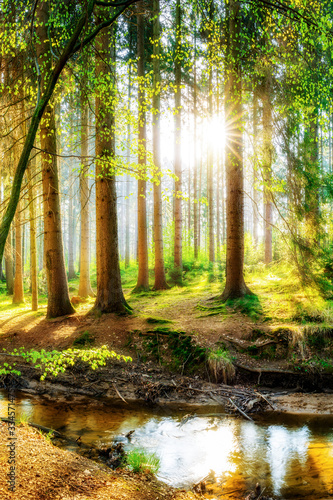 Okleiny na drzwi - Lasy - Drzewa  spring-forest-with-bright-sun-shining-through-the-trees