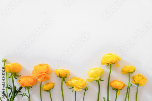 Fotomural Beautiful bouquet of yellow ranunculus flowers with visible petal texture structure