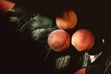 Peaches On Green Plant Leaves