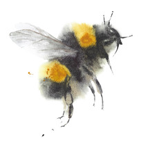 Bee Watercolor Painting Illust...