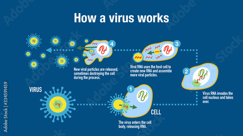 Infographic showing how a virus attack the immune system Canvas Print