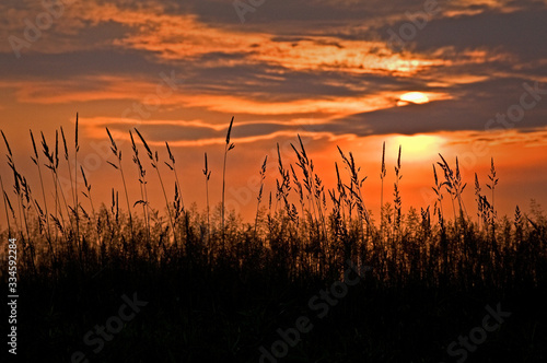 Summer prairie grasses silhouetted against a dramatic orange sunset sky Fototapet