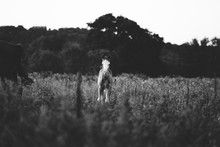 Foal Horse Alone In Black And ...