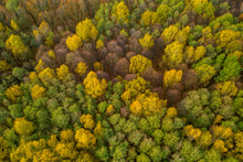Aerial Shot Of Forest In Autum...