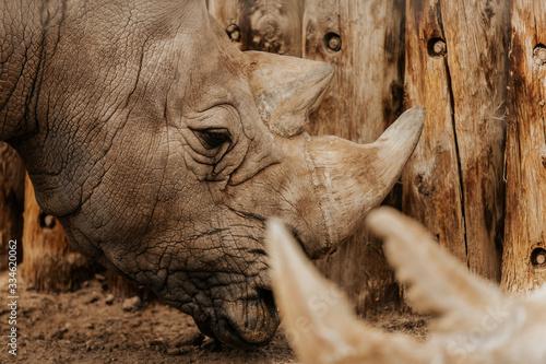 Rhino 1 Tapéta, Fotótapéta