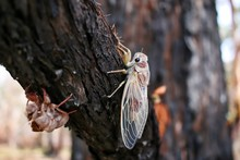 A Baby Cicada Just Came Out Of...