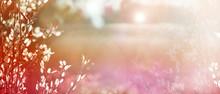 Blurred Natural Background. De...