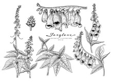 Sketch Floral Decorative Set. ...