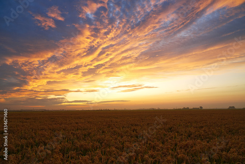 Beautiful sunset and cloudscape over golden fields