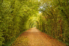 A Country Path Through The Aut...