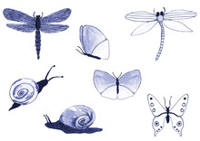 Seth With Different Insects. B...